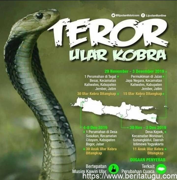 Info Masyarakat (Teror Ular Cobra)
