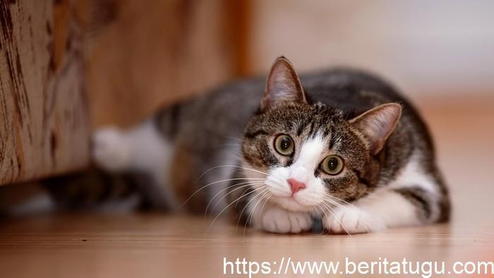 Test Kepribadian : Lebih Suka Kucing atau Anjing? Ini Penjelasannya