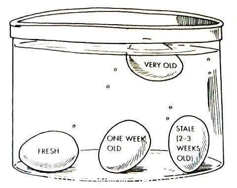 Cara Mengetahui Telur Yang Masih Layak Konsumsi Atau Sudah Lama Dan Tidak Layak Dimakan